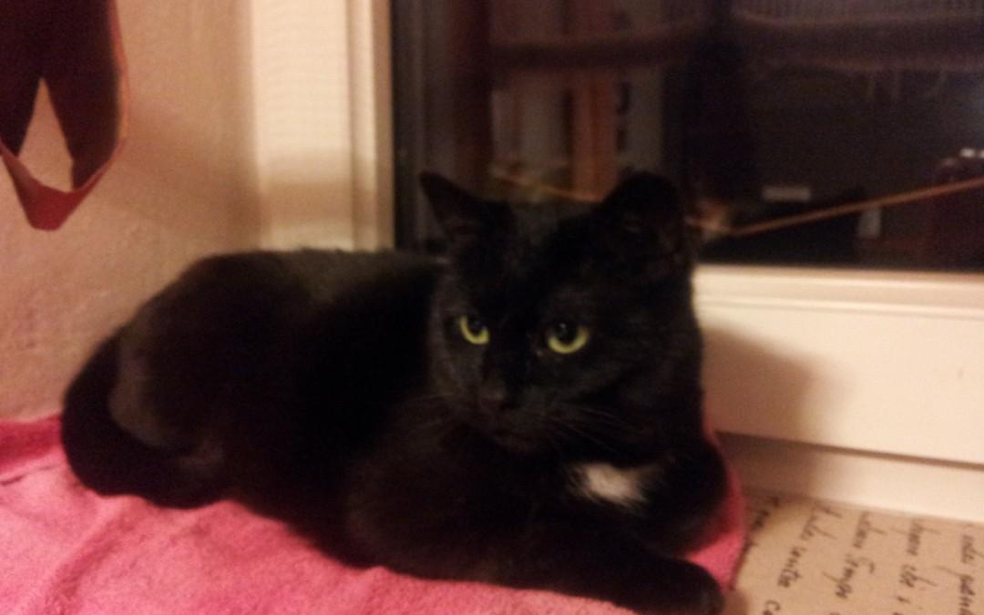 Katze Luna (ehemals Nanni)