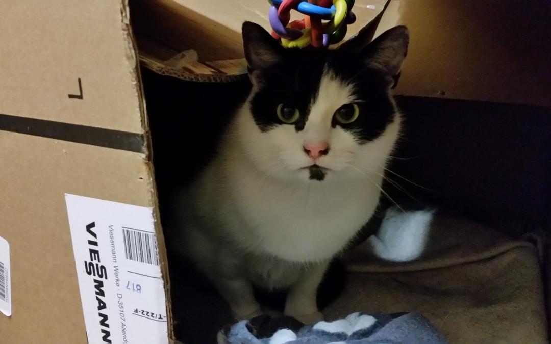 Katze Gisi – eine (ge)wichtige Geniesserin