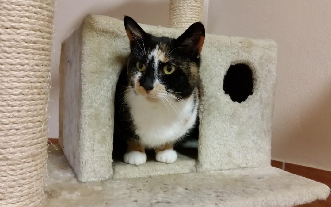 Katze Sonja heißt jetzt Mia