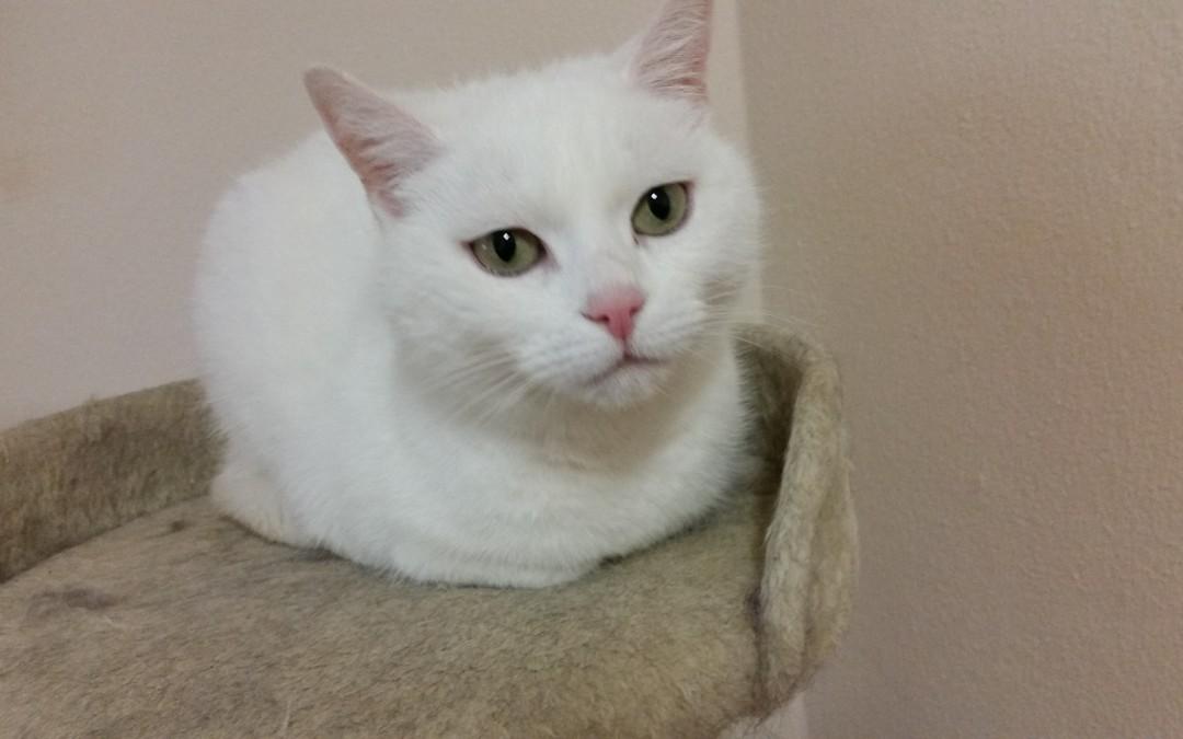 Katze Bianca
