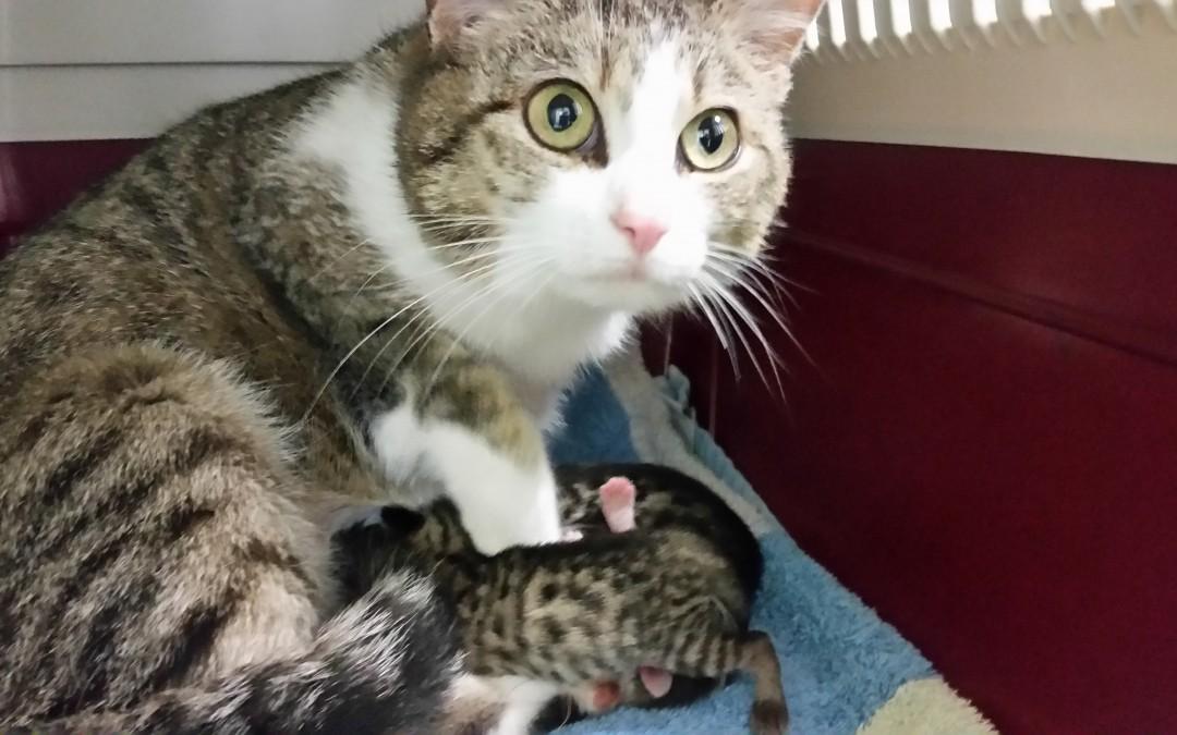 Camilla – tolle Mama mit ihren Babies