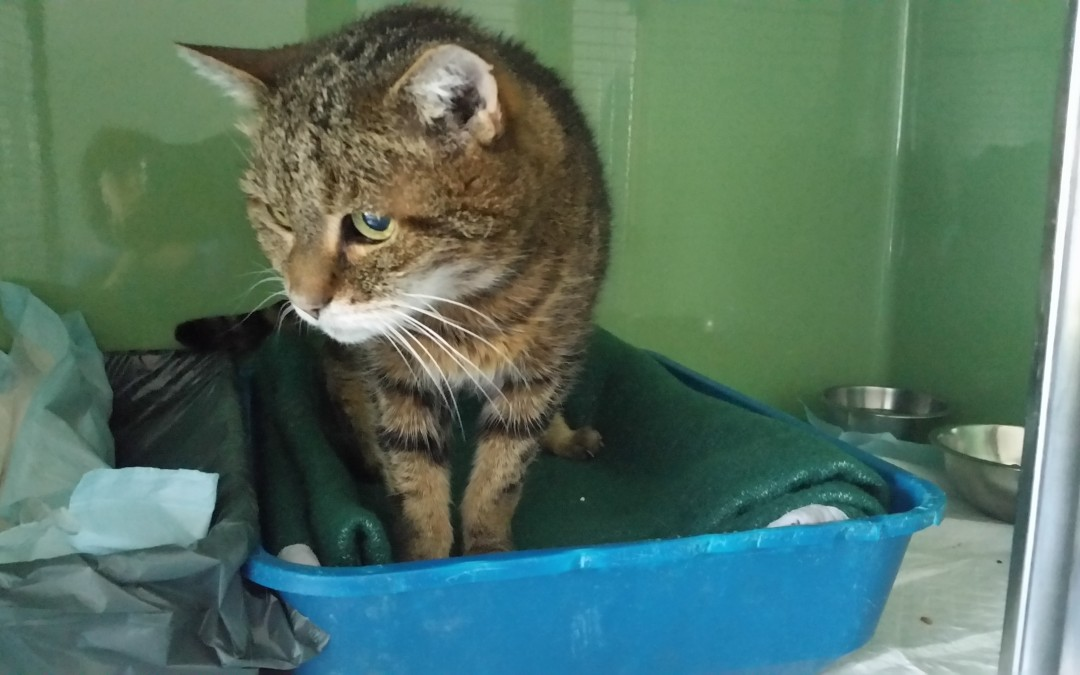 Katzenopa Felix sucht sein 'letztes' Zuhause