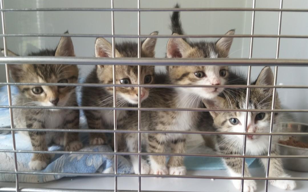 Fundkatzenkinder Freihung – Freihungsand