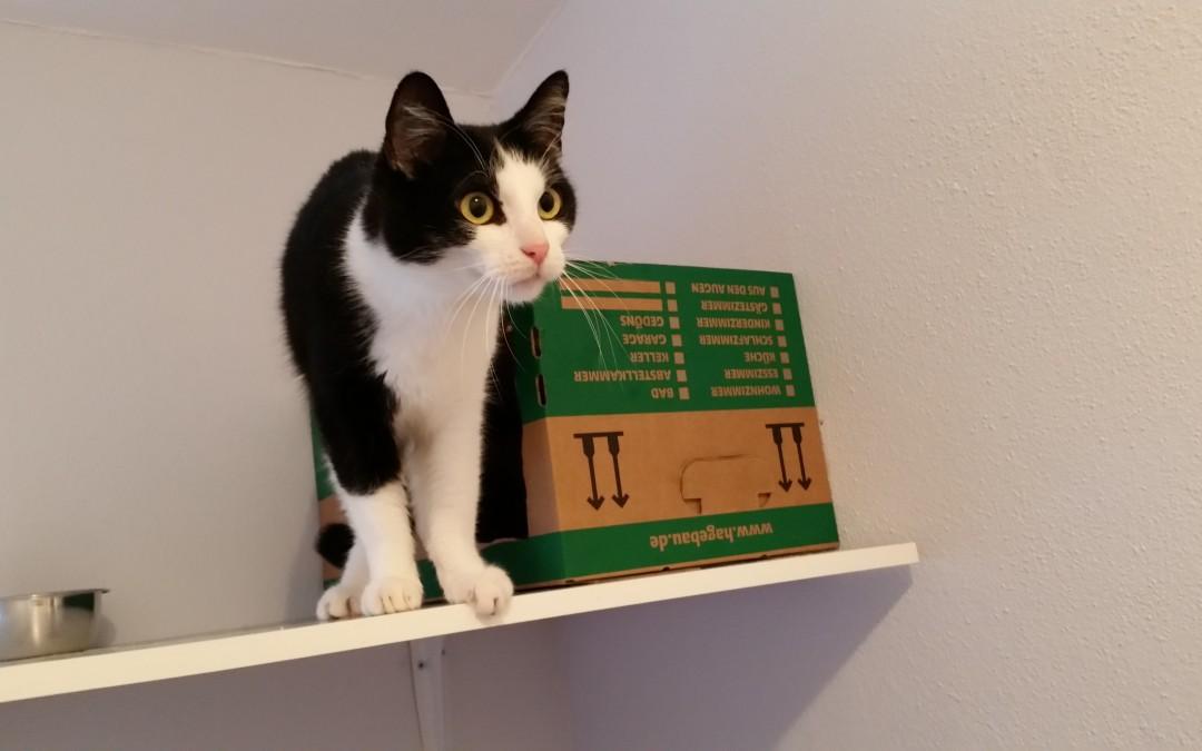 Katze Kira und Kater Tommy