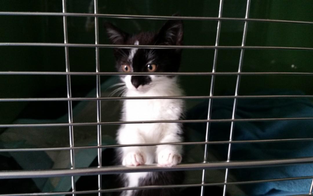 Katzenmädchen Perona