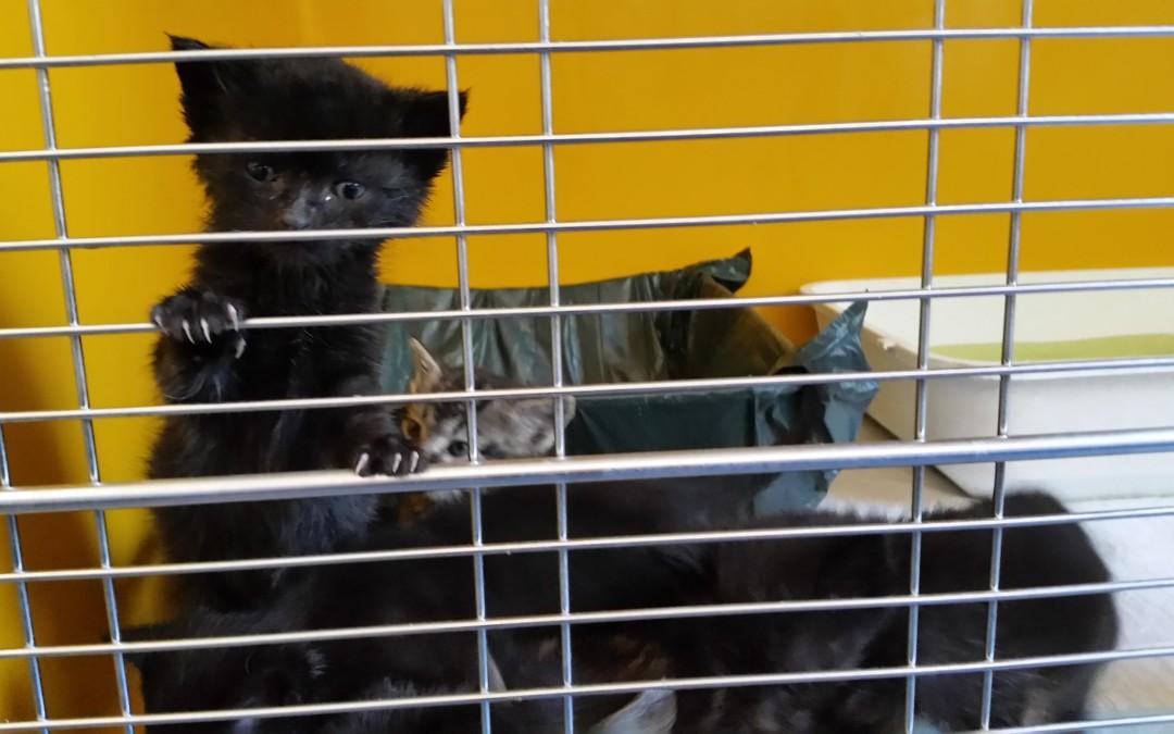 6 kleine Katzenbabies gefunden in Vilseck