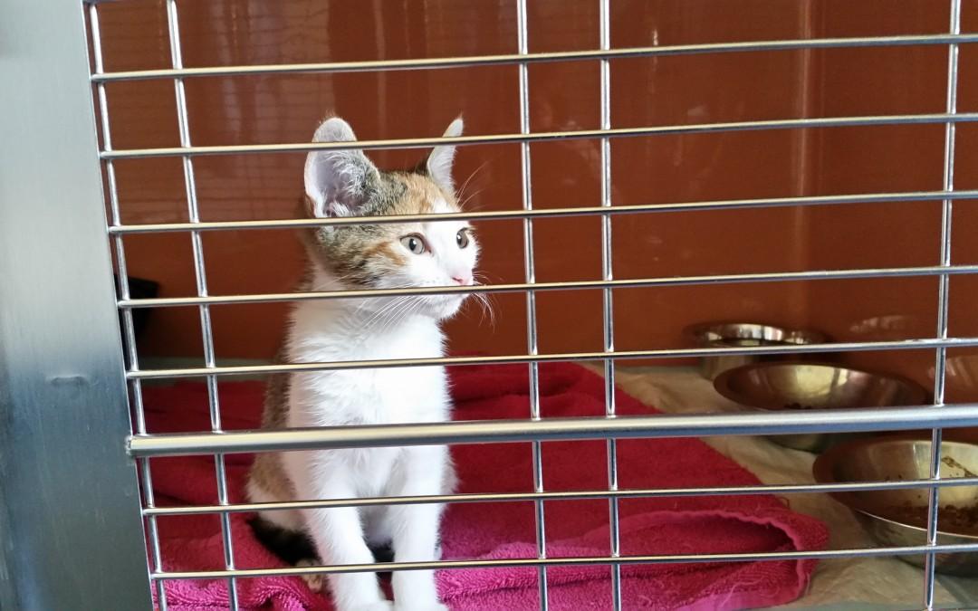 Kleines Katzenmädchen Daisy