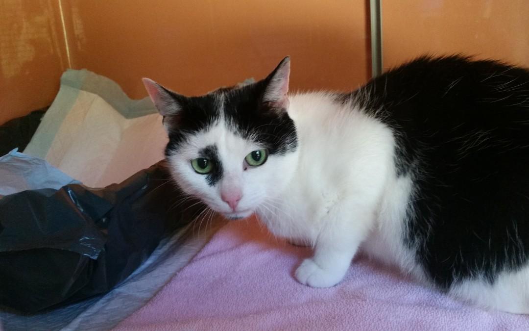 Billy und Milka – Katzenpaar sucht neue Familie