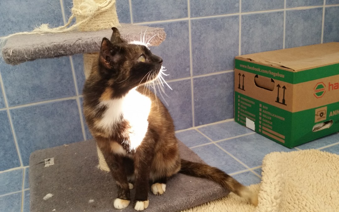 Katzenlady Sophie