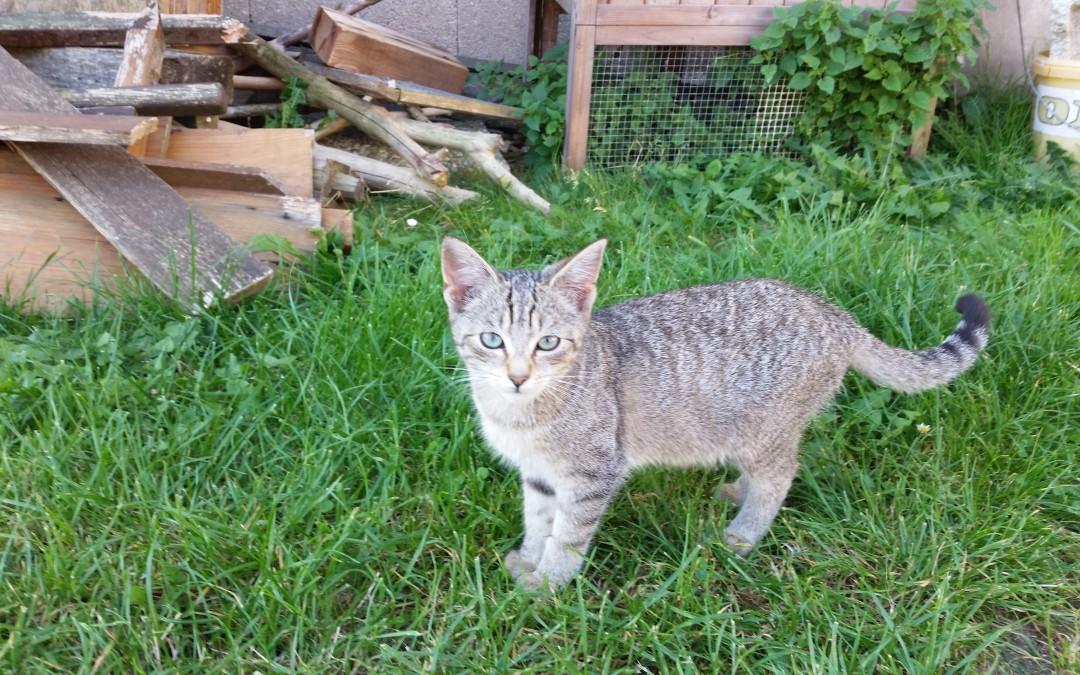 Fundkatzenkinder Illschwang / Pesensricht