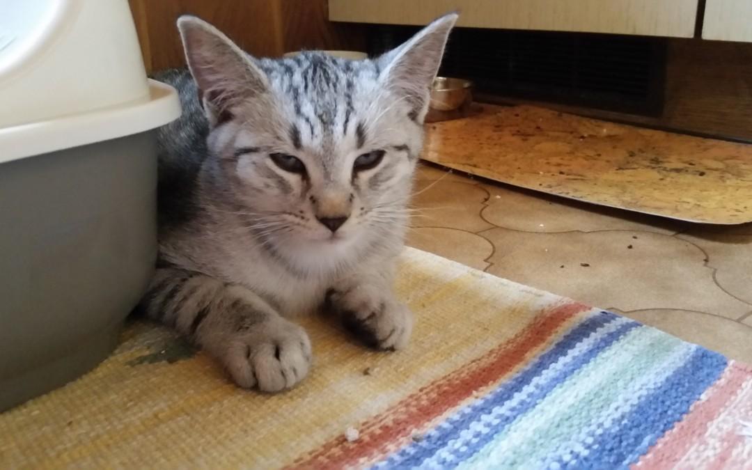 kleiner 'Whiskas' Kater sucht neues Zuhause