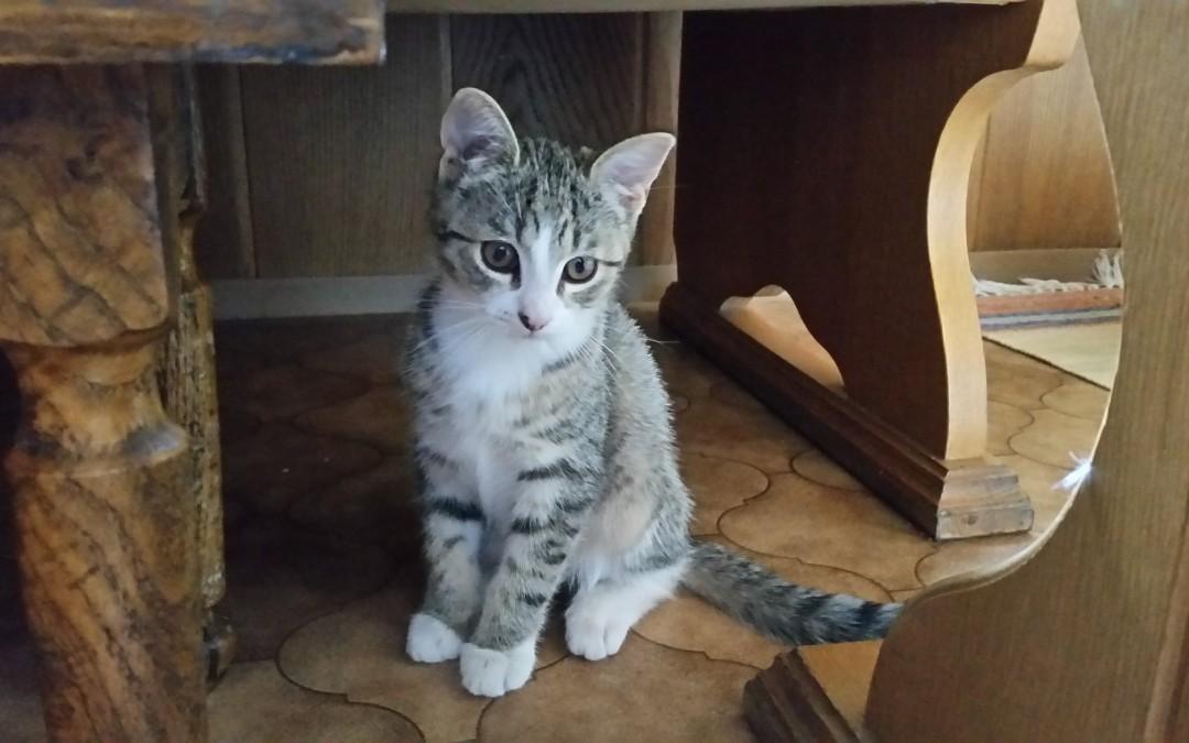 kleines Katzenmädchen sucht ihre Familie