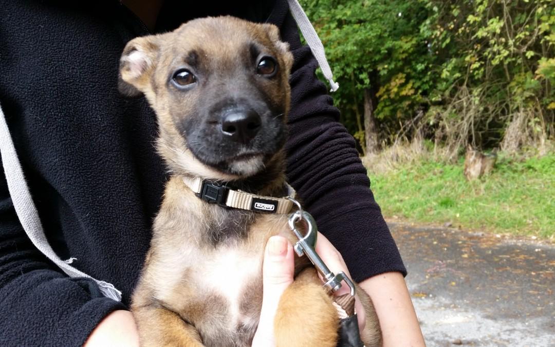 Mila – Hundemädchen