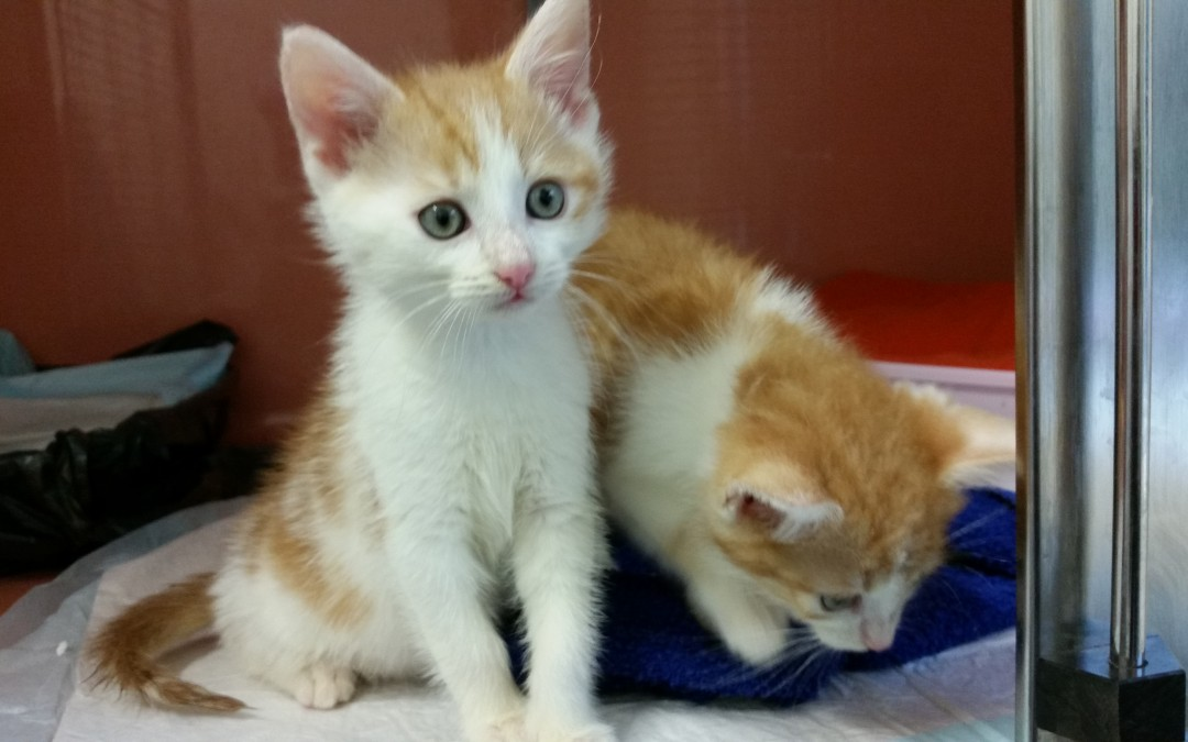 Katzenkinder Eddy und Felix