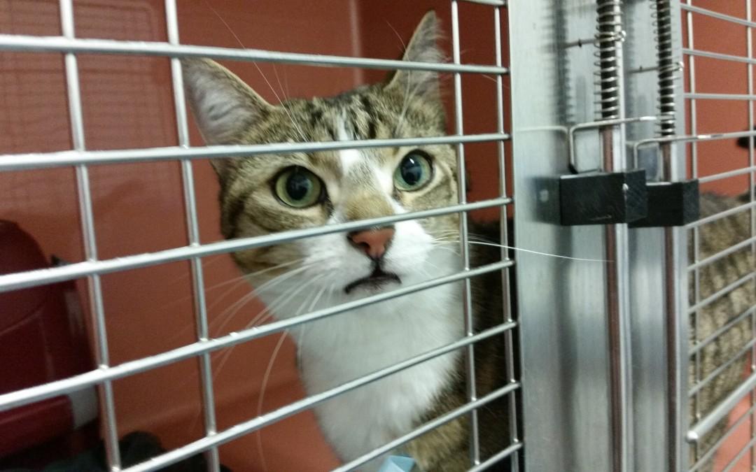 Katzenlady Lilly – eine besondere Fellnase