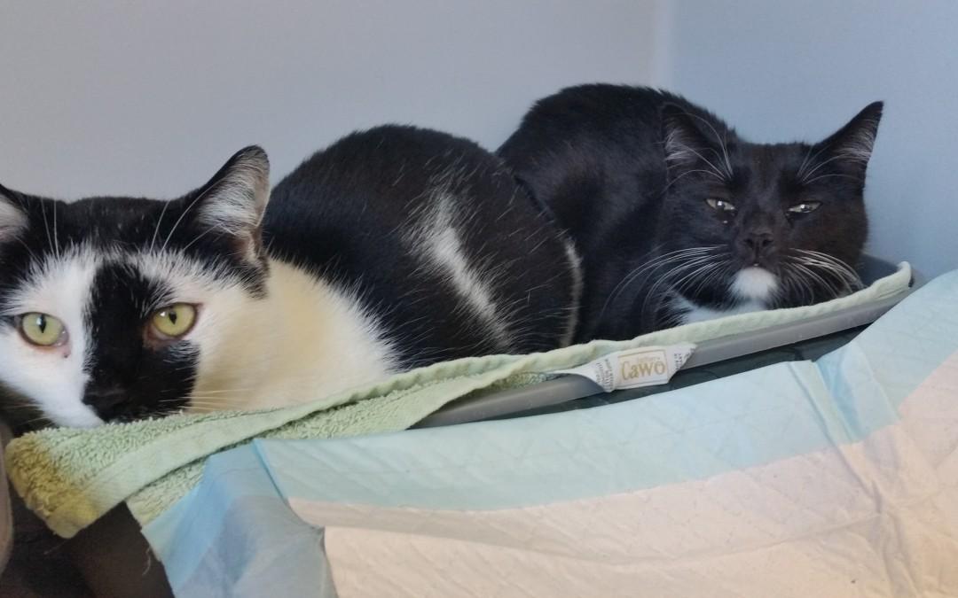 Lady und Burschi – gemeinsam in die neue Wohnung