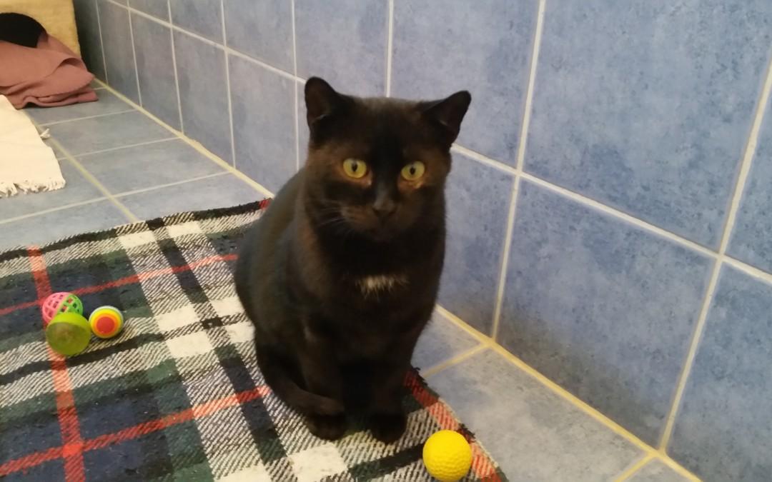 Katzenlady Becky – eine ganz besonders liebe Katze!