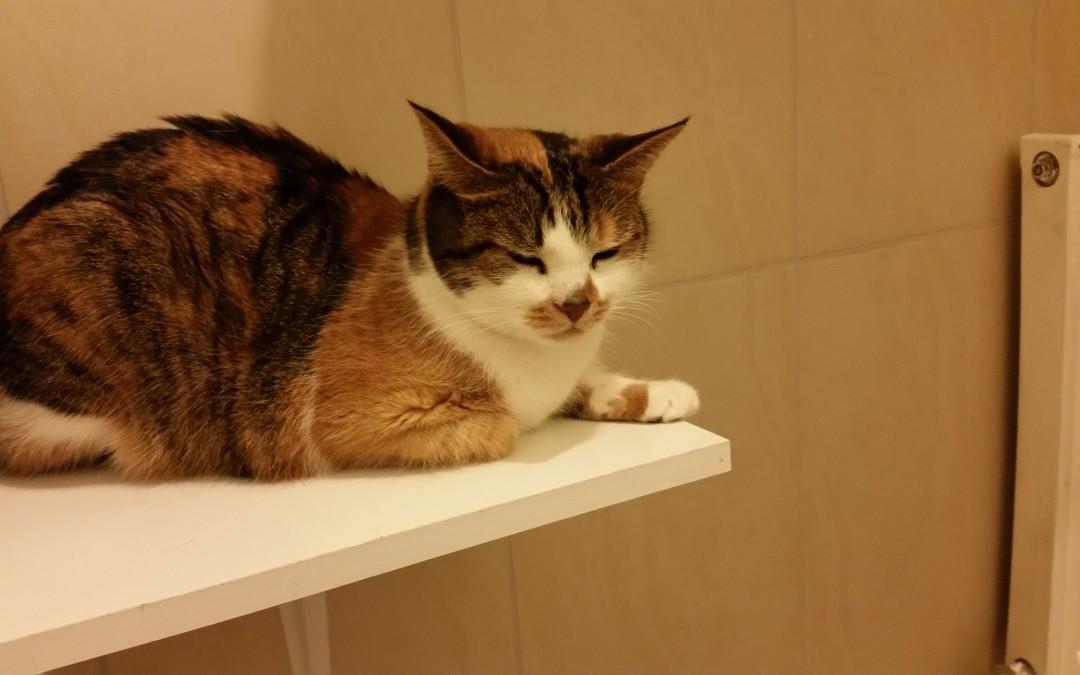 Katzenlady Michi