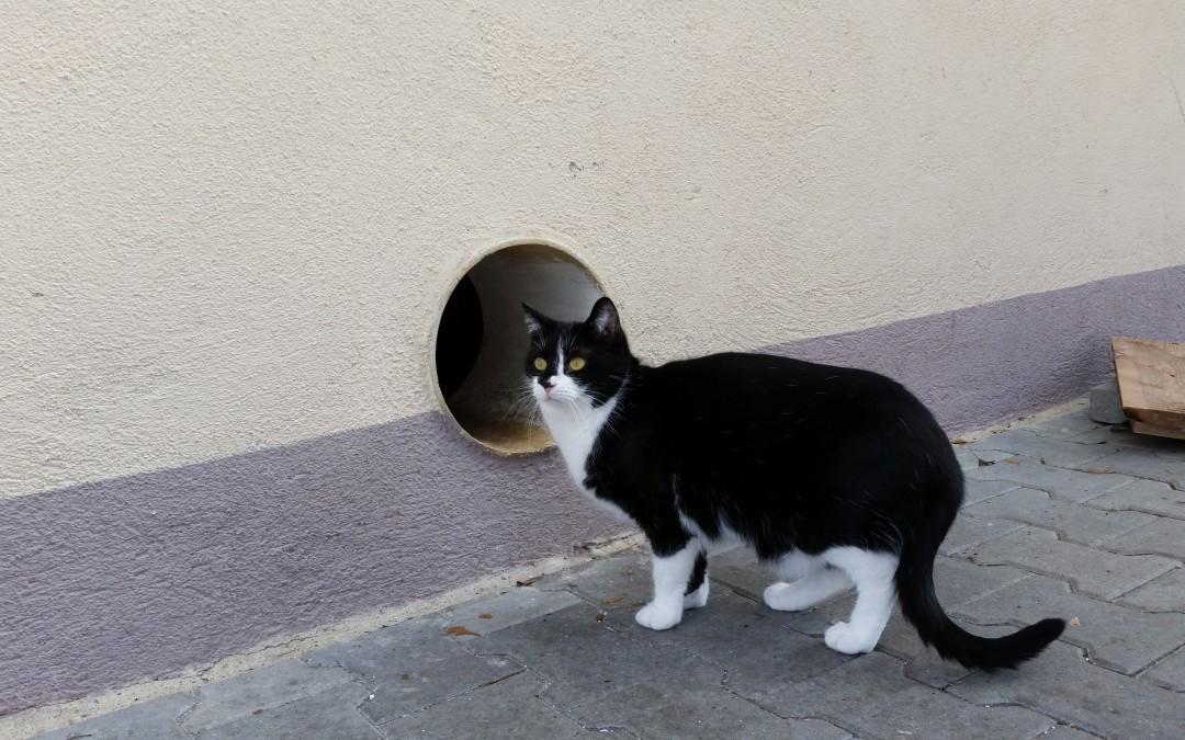 Katzenmädel Fina