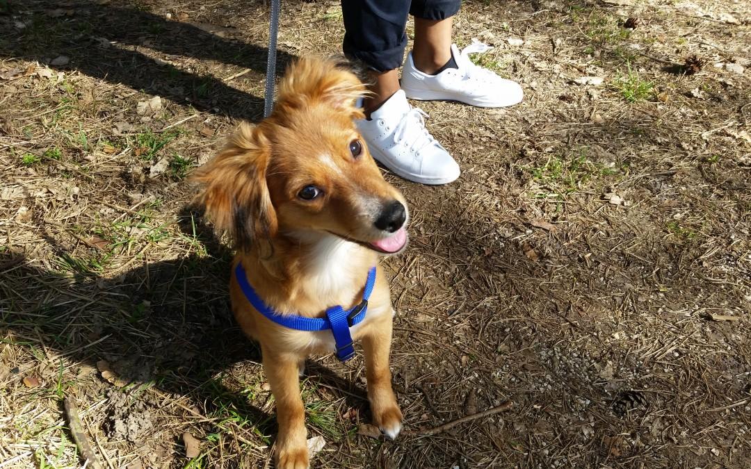 Marley – Kleines Hundekind hat seine Familie gefunden