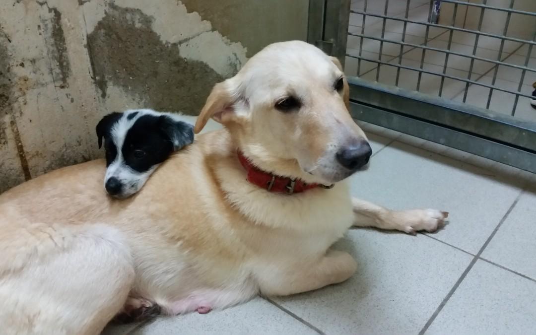 Hundemama Flocki und ihre 4 Hundekinder