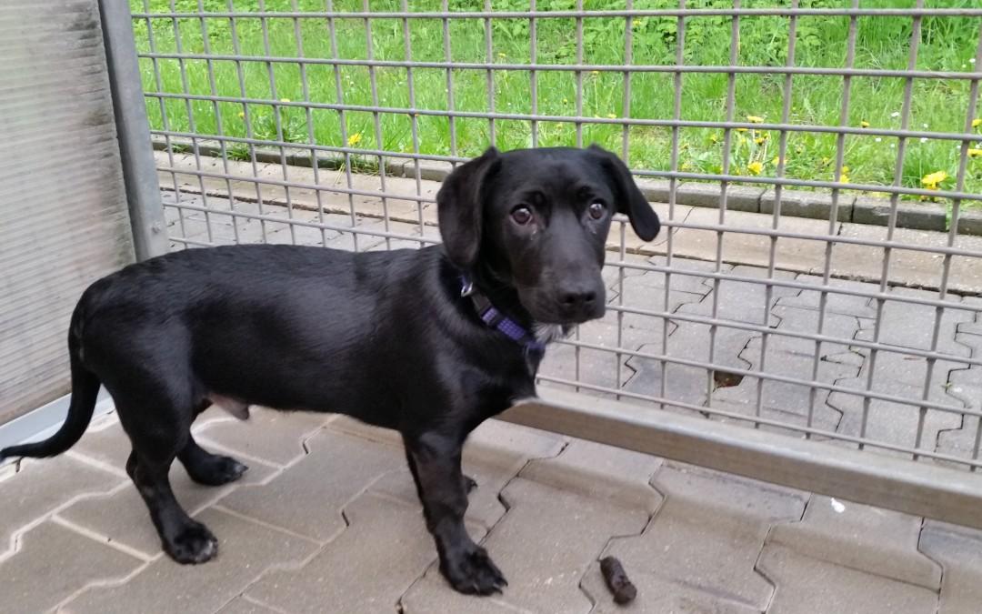 Bubi – junger Hundebub