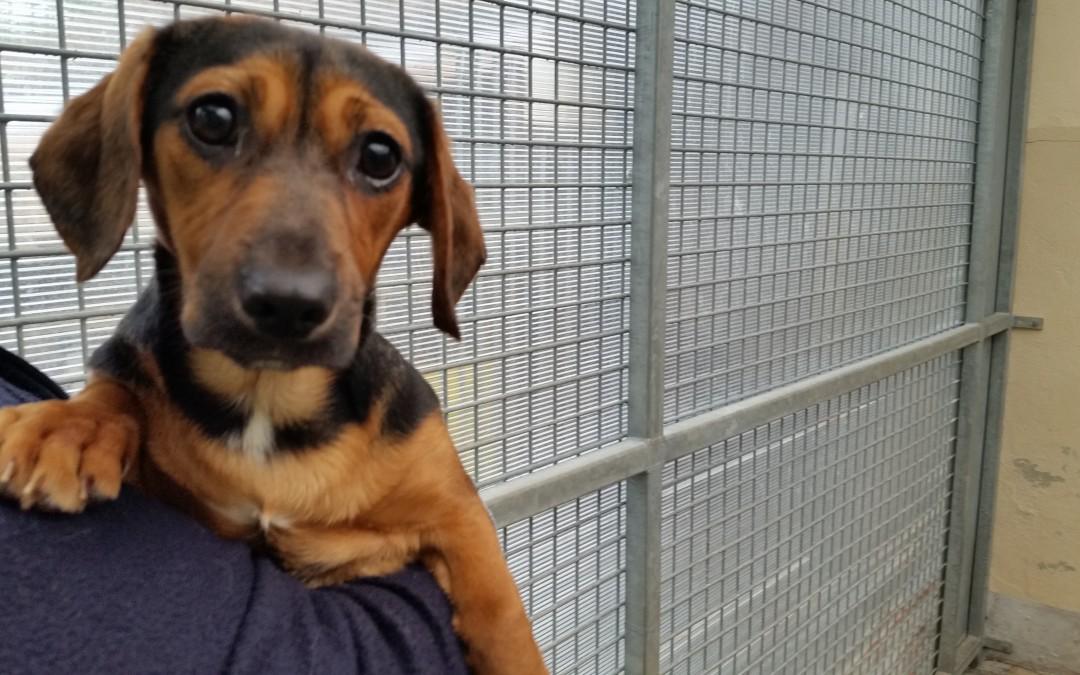 Mausi – junges Hundemädl sucht ihre neue Familie