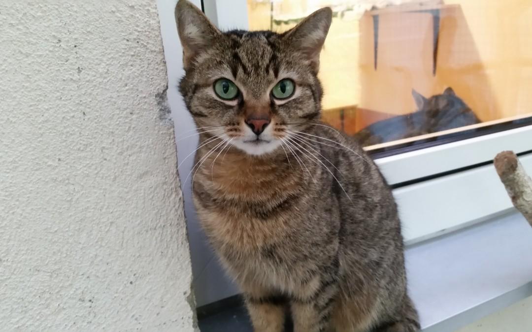 Katzenlady Linda