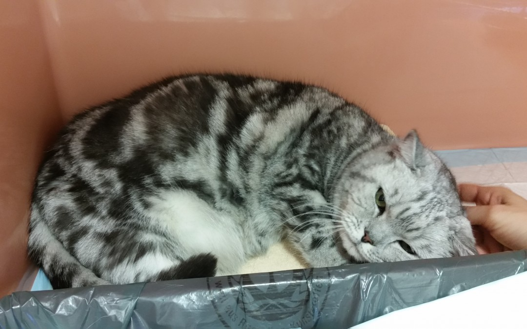 sehr rüstiger Katzenopa sucht liebe Familie