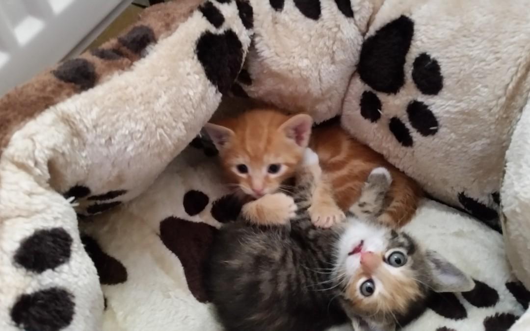 Lilly and the Kids – vier Katzenkinder und ihre Mama