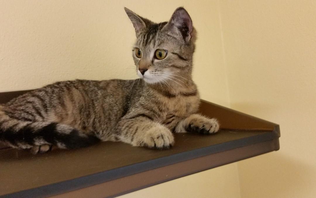 junges Katzenmädel Leonie