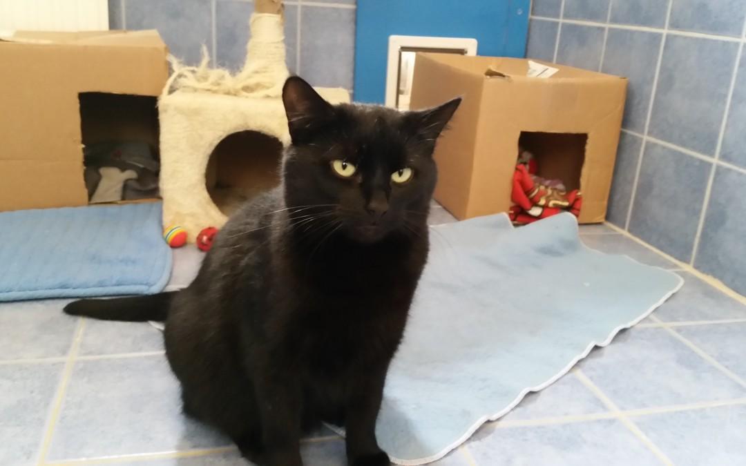 Katzenlady Alexa
