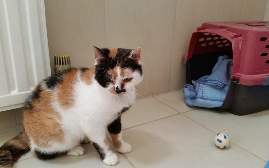 Katze Käthe – Glückskatze hat neue Familie