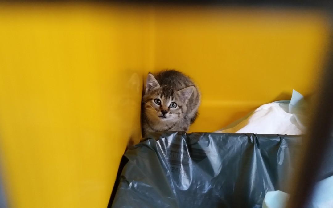 Tigerle – kleiner Katzenbub