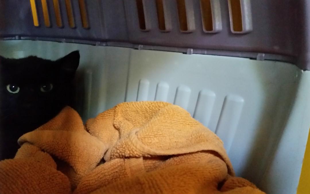 Michi – scheuer Katzenkumpel
