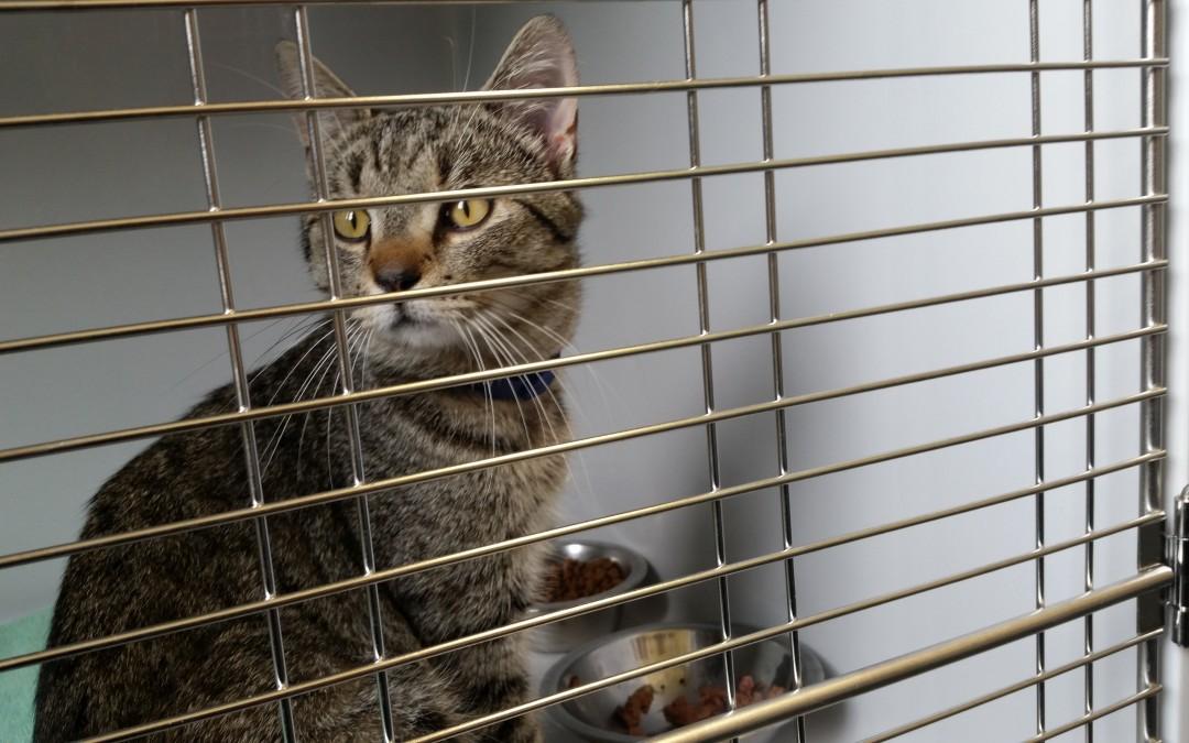 Mylo, getigerter Katzenkumpel