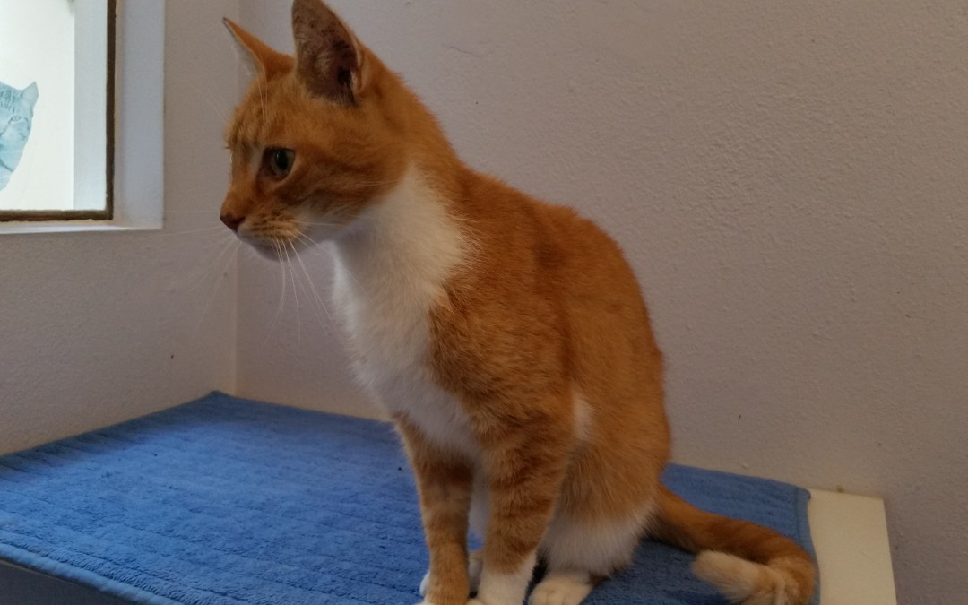 Rusty, ein lieber Kater – heißt jetzt Robin :+)