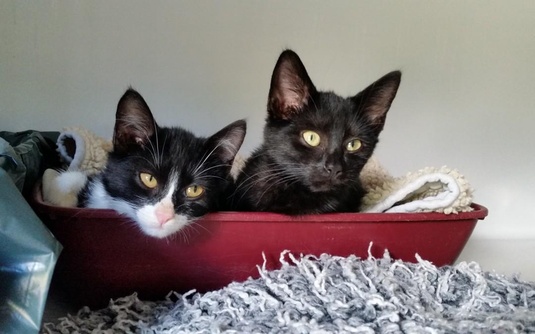 Sandy und Sunny – zwei junge Katzenmädels