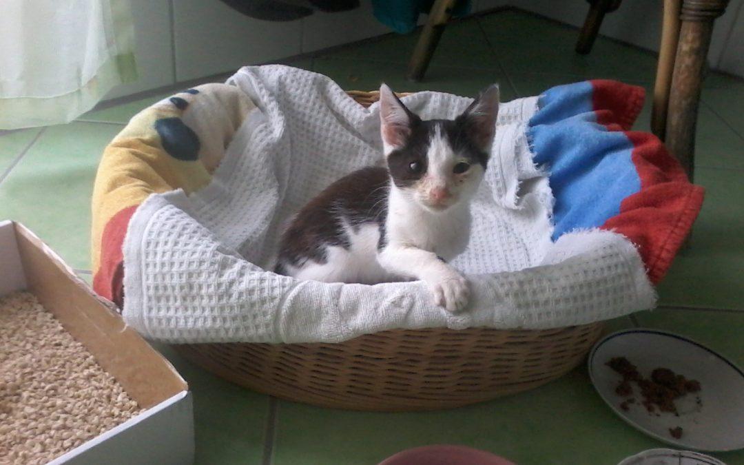 kleines Katzenkind in Vilseck gefunden 🐈