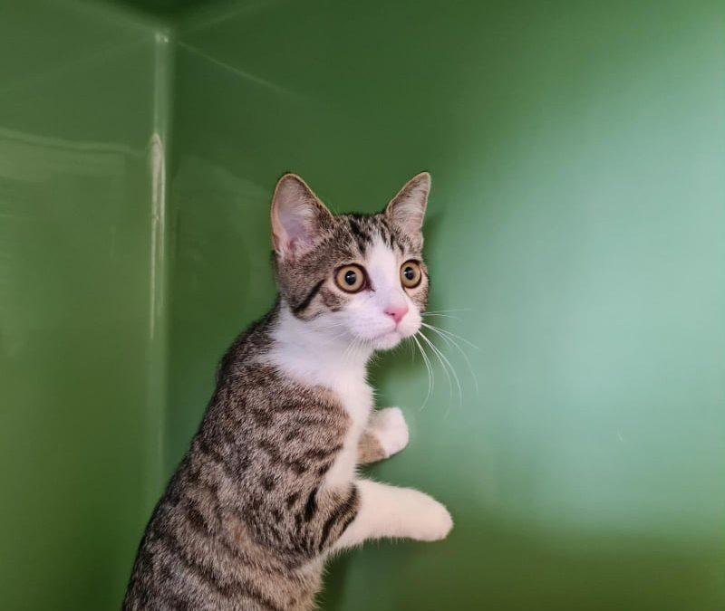 Milli – kleine Katze mit viel Charme