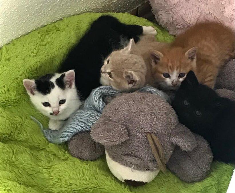 ein zuckersüßes 'Sextett' an kleinen Katzenkindern ….