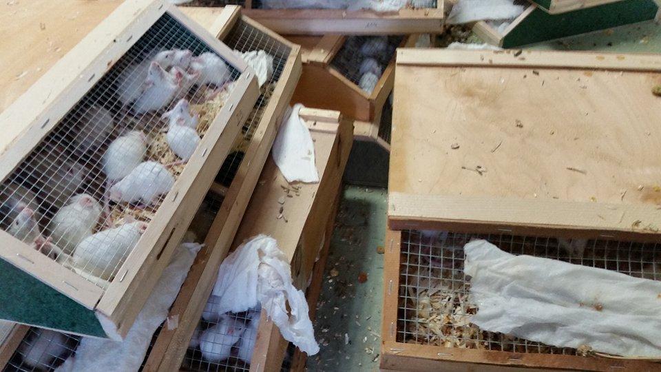 Grösster illegaler Tiertransport gestoppt – mit über 7000 Tieren!!
