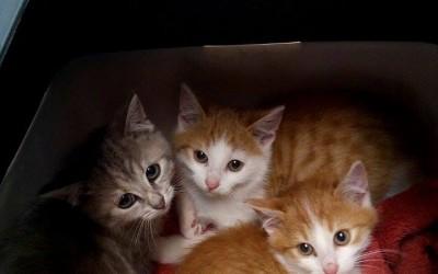 Berti, Yuri und Schwesterherz Shy – drei junge Fellnasen