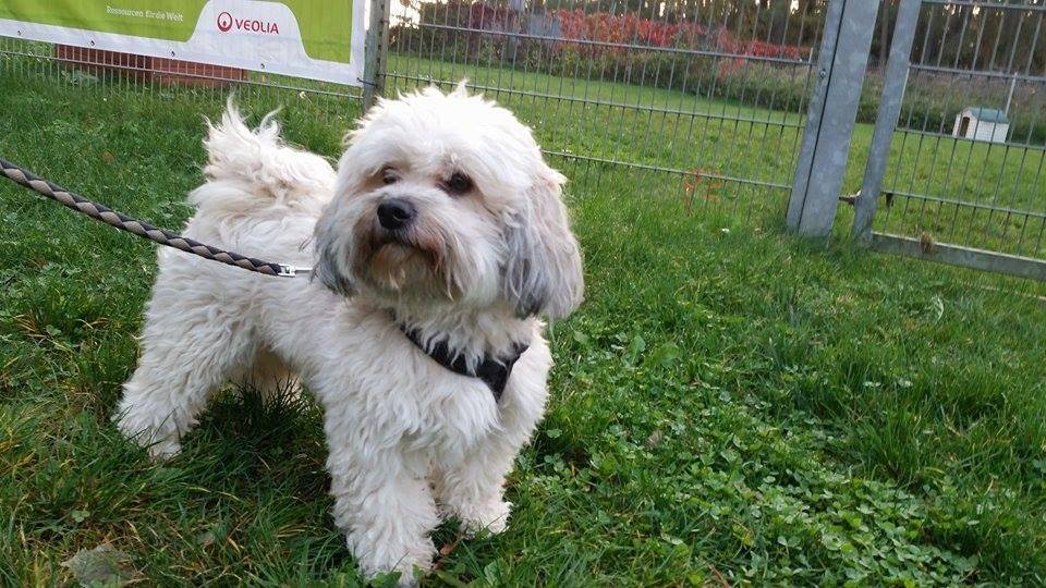 Coco – kleiner, trauriger Hundebub