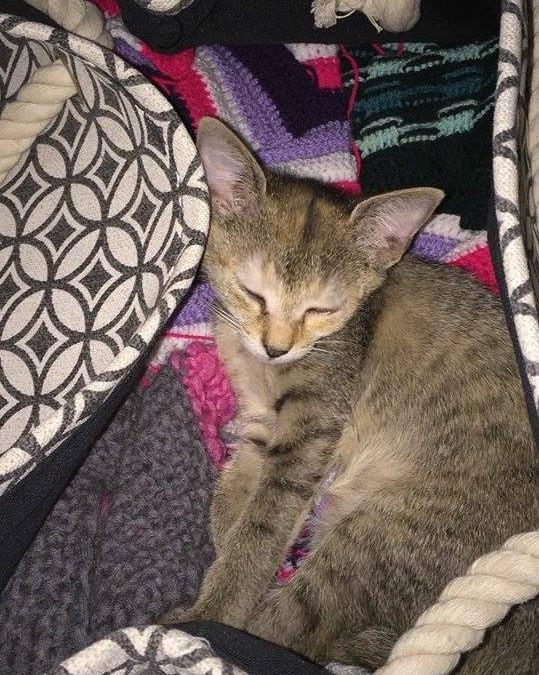Lucie – liebes, kleines Katzenmädel