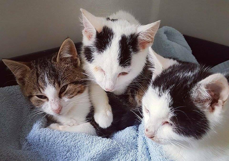 Drei junge Kater = Paul, Flo und Jojo