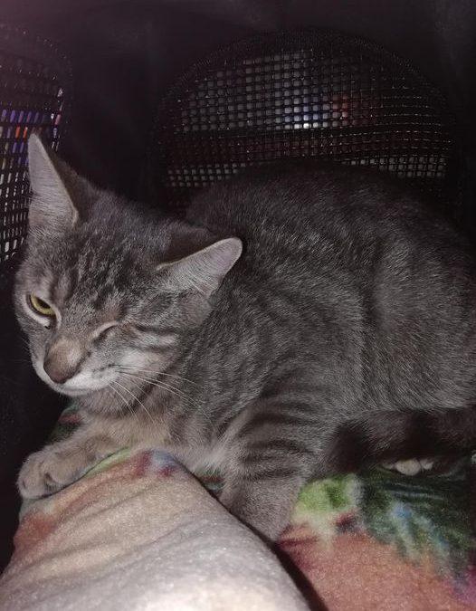 Katzenmädel Leni