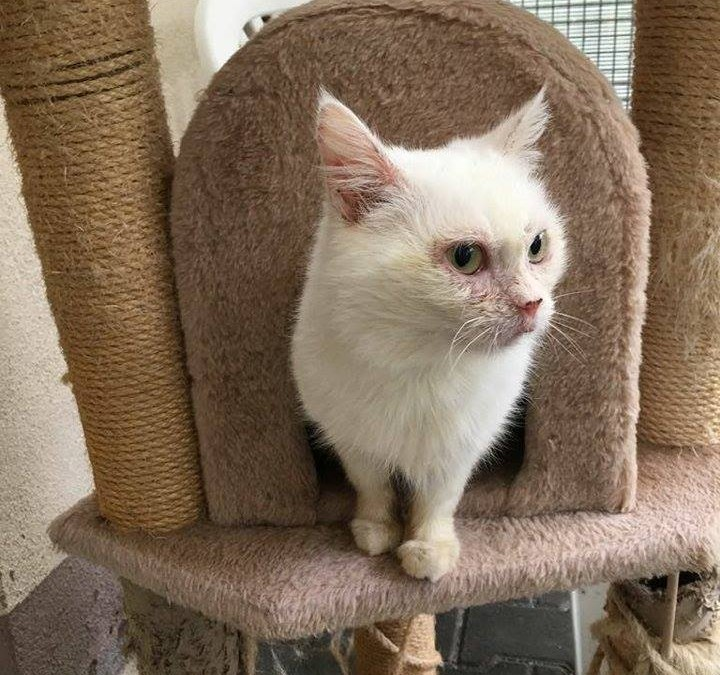 Luna – ältere Katzenlady