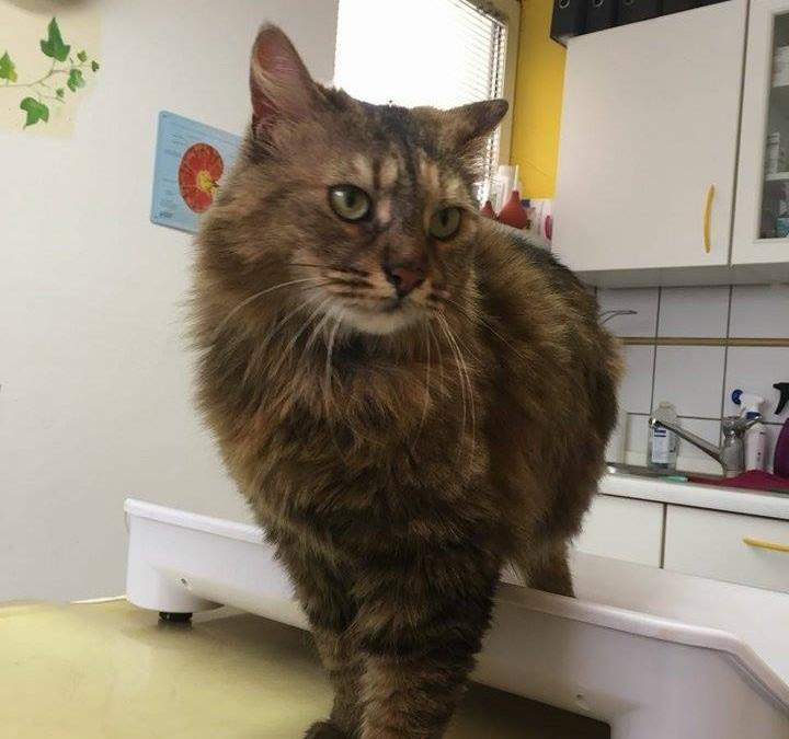Katzenlady Hermine