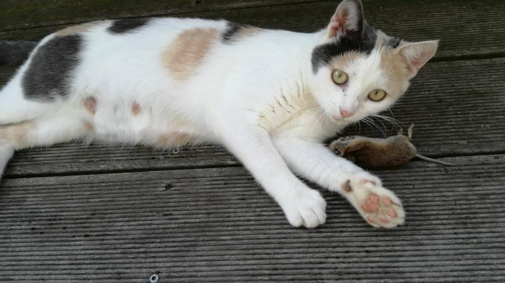 Caramel – hübsche Katzenlady
